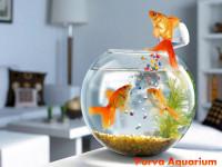 Purva Aquarium